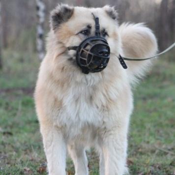 Бош - Собаки в добрые руки