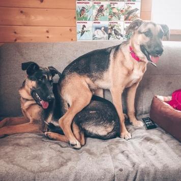 Дин и Сэм - Собаки в добрые руки