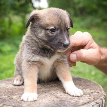 Щенок - Собаки в добрые руки