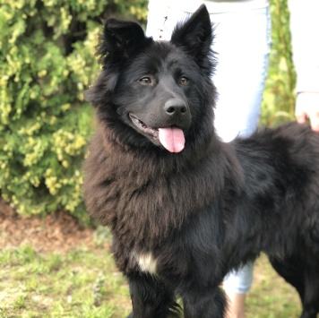 Добряк-Тимоша - Собаки в добрые руки