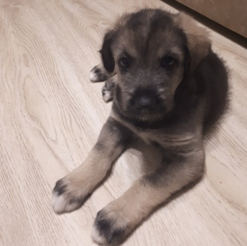 Пуся - Собаки в добрые руки