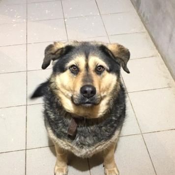 Грэтта - Собаки в добрые руки