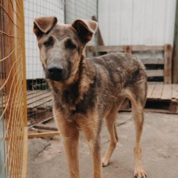 Киану - Собаки в добрые руки