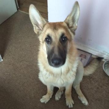 Цимер - Найденные собаки