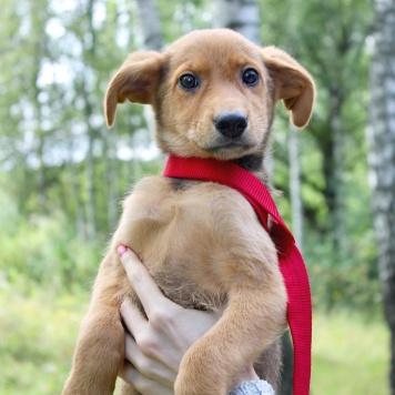 Фиджи - Собаки в добрые руки