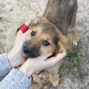 Сури - Собаки в добрые руки