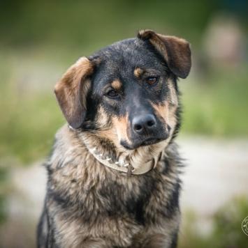 Дина - Собаки в добрые руки