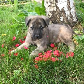 Клюковка - Собаки в добрые руки