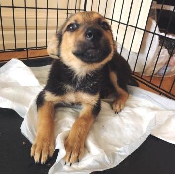 Нет имени - Собаки в добрые руки