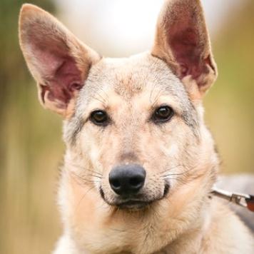 Кэш - Собаки в добрые руки