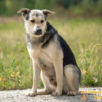 Дик - Собаки в добрые руки