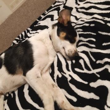 Зайка - Найденные собаки