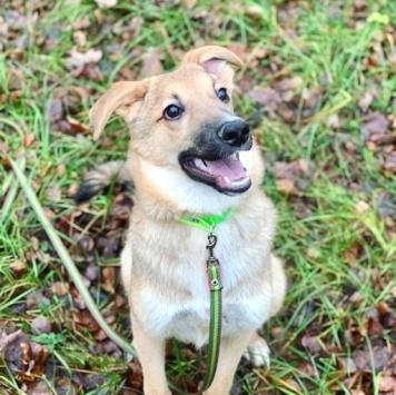 Кирби - Собаки в добрые руки