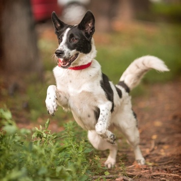 Позитивная Мила - Собаки в добрые руки