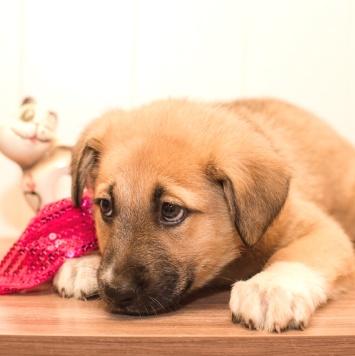 Ольха - Собаки в добрые руки
