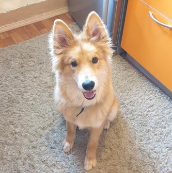 Аксель - Собаки в добрые руки