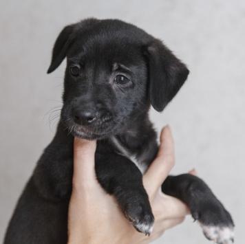 Бран - Собаки в добрые руки