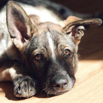 Бублик - Собаки в добрые руки