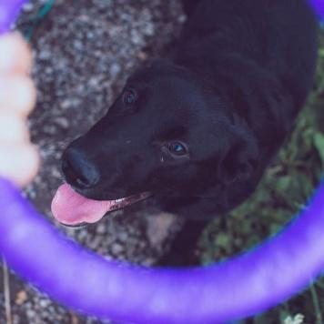 Черника Лада - Собаки в добрые руки