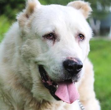 Бигвайт - Собаки в добрые руки