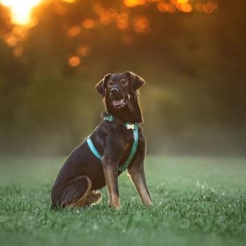 Тревис - Собаки в добрые руки