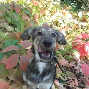 Таис - Собаки в добрые руки