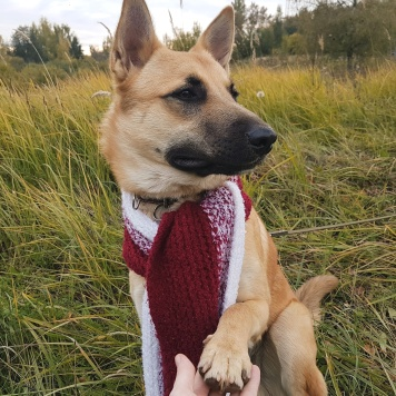 Персей - Собаки в добрые руки