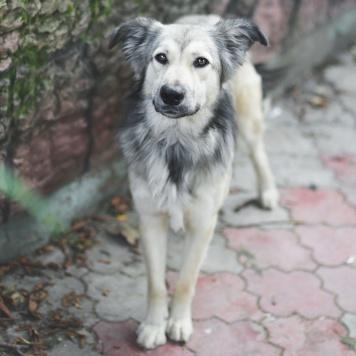 Аннет - Собаки в добрые руки