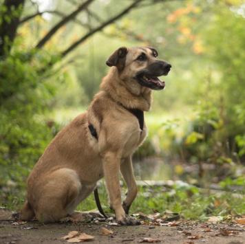 Фея - Собаки в добрые руки