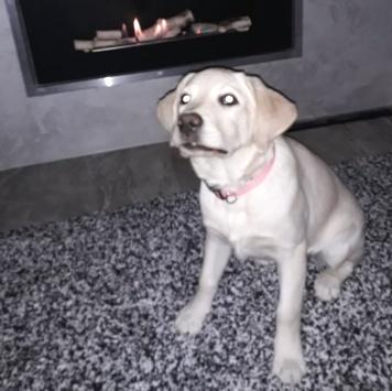 Боня - Пропавшие собаки