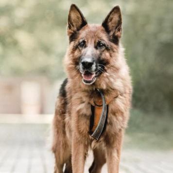 Эвита - Собаки в добрые руки