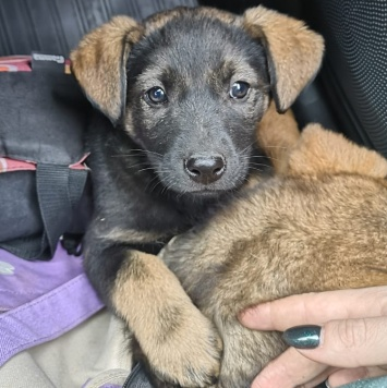 Марго - Собаки в добрые руки