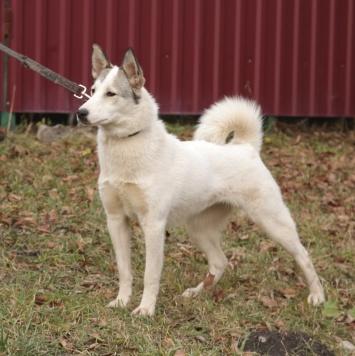 Изящная Диана - Собаки в добрые руки