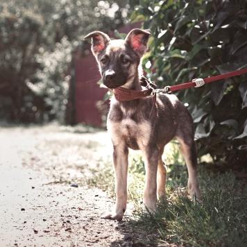 Зена - Собаки в добрые руки