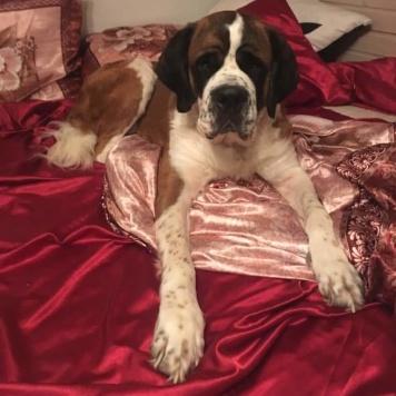 Кассандра - Собаки в добрые руки