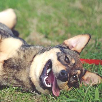 Калипсо - Собаки в добрые руки