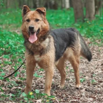 Пух - Собаки в добрые руки