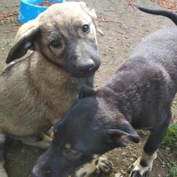 Бозон и Толстун - Собаки в добрые руки