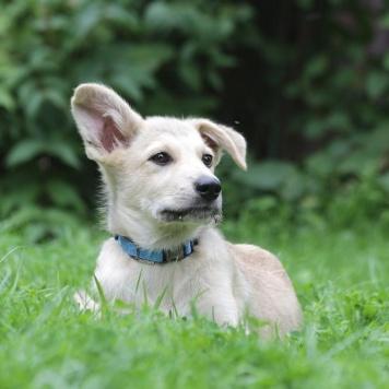 Смайлик - Собаки в добрые руки