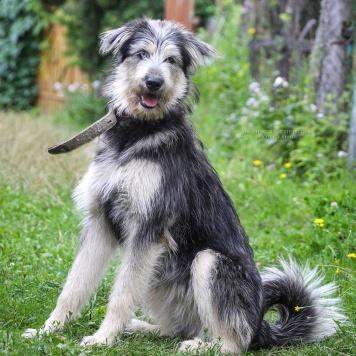 Джага - Собаки в добрые руки