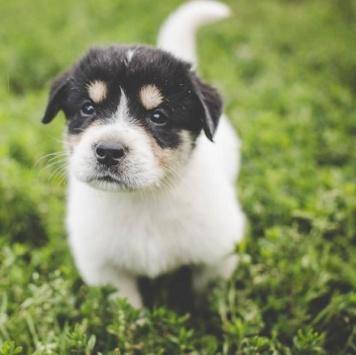 Билли - Собаки в добрые руки