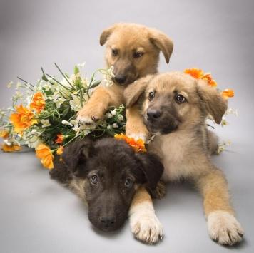Жанетта - Собаки в добрые руки