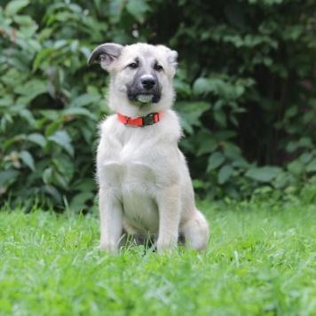 Белоснежка - Собаки в добрые руки