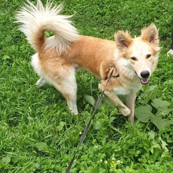 Тишка - Собаки в добрые руки