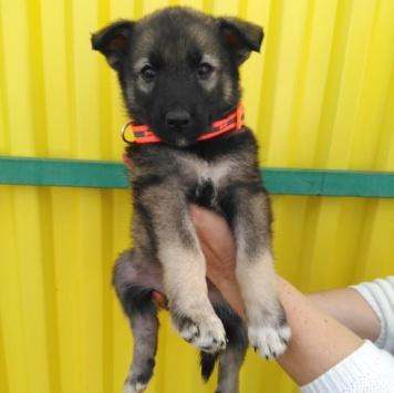 Берта - Собаки в добрые руки