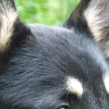 Вульф - Собаки в добрые руки