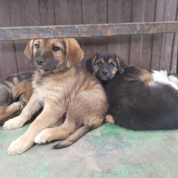 без имени - Найденные собаки