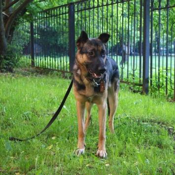 Мухтар - Найденные собаки