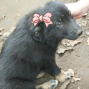 Фортуна- удачливая - Собаки в добрые руки