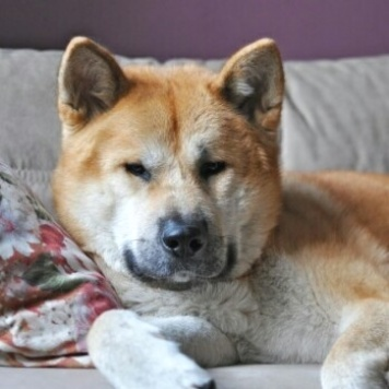 Саму - Собаки в добрые руки